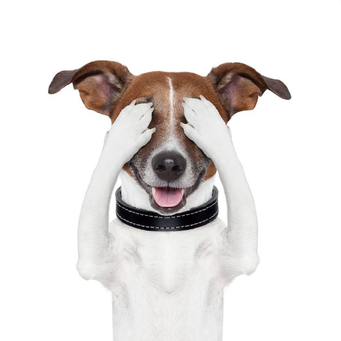 A kutyák tudják, mikor hazudnak nekik az emberek