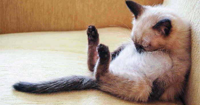 """Képtalálat a következőre: """"alvó macska"""""""