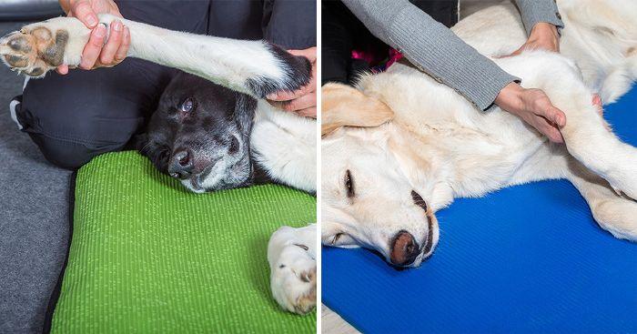7 egyértelmű tünet, ami azt jelzi, kutyádnak ízületi gyulladása van