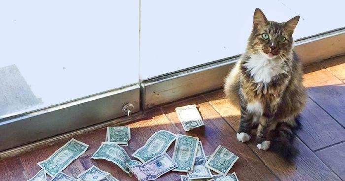a sok pénzt kereső macska